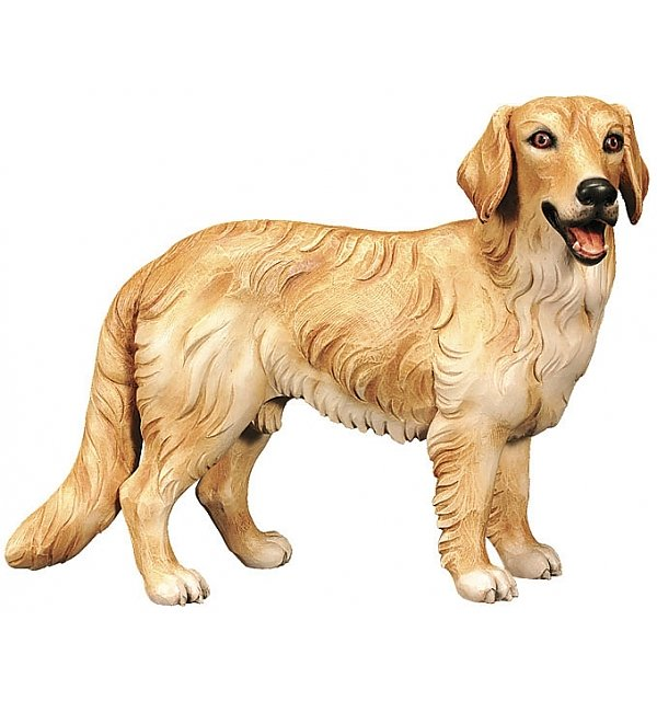 2520 - Golden Retriever COLOR