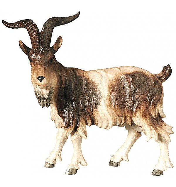 2590 - Billy goat standing COLOR